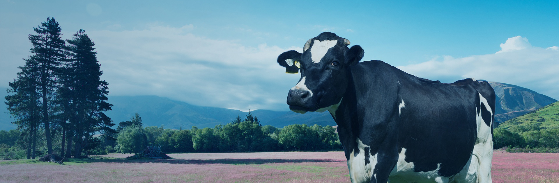 Премиксы для крупнорогатого скота